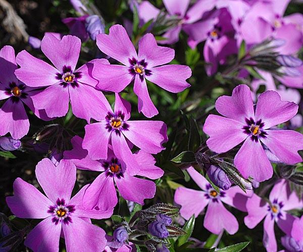 6 April 2011  Aufgenommen im Botanischen Garten der