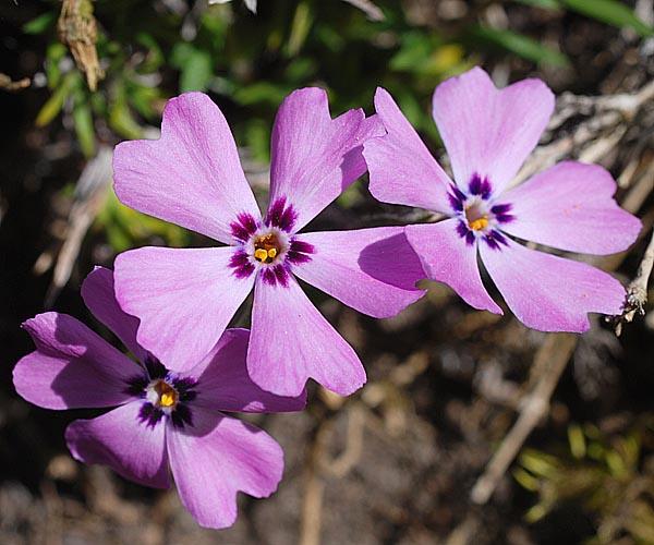 9 April 2011  Aufgenommen im Botanischen Garten der
